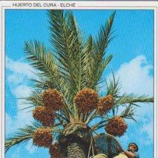 Postales: (41) ELCHE. HUERTO DEL CURA. RECOGIDA DEL FRUTO. Lote 35676286