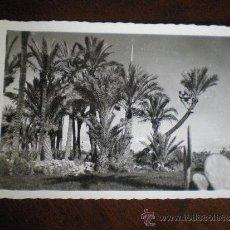 Postales: ELCHE-RECOLECCION DE DATILES-EDC.ARRIBAS. Lote 36388130