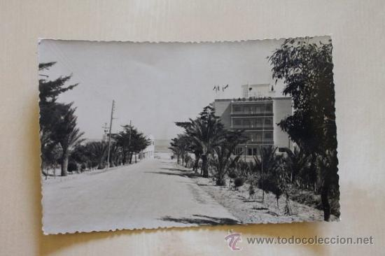 POSTAL. ALICANTE. GUARDAMAR DEL SEGURA. CARRETERA DE LA PLAYA. EXCLUSIVAS PALLARES. (Postales - España - Comunidad Valenciana Antigua (hasta 1939))