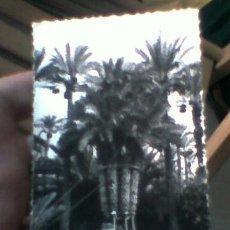 Postales: PALMERA IMPERIAL HUERTO DEL CURA ELCHE ED GARRABELLA Nº 17 CIRCULADA (B7). Lote 38376831