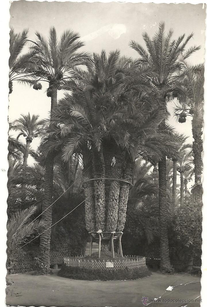 ELCHE, HUERTO DEL CURA LA PALMERA, GARCIA GARRABELLA Nº 29 (Postales - España - Comunidad Valenciana Moderna (desde 1940))