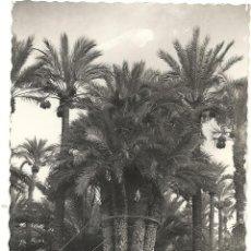 Postales: ELCHE, HUERTO DEL CURA LA PALMERA, GARCIA GARRABELLA Nº 29. Lote 40353862