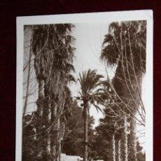 Postales: ANTIGUA FOTO POSTAL DE BUSOT. ALICANTE. AVENIDA DE LAS PALMERAS. SIN CIRCULAR. Lote 45309304