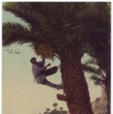 Postales: ELCHE (ALICANTE): COGIENDO DÁTILES EN EL HUERTO GIL. LAMPISTERÍA DE ANTÓN. NO CIRCULADA (AÑOS 10). Lote 46899384