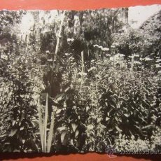 Postales: POSTAL NOVELDA ( ALICANTE ). Lote 54086268