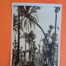 Postales: ANTIGUA POSTAL DE ELCHE - BOSQUE DE PALMERAS - FOTO L. ROISIN..R - 1746. Lote 44737173