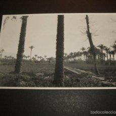 Postales: ELCHE ALICANTE HUERTOS Y PALMERAS POSTAL FOTOGRAFICA AÑOS 20. Lote 55535144