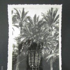 Postales: POSTAL ALICANTE. ELCHE. HUERTO DEL CURA. PALMERA IMPERIAL. . Lote 57071130