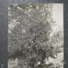 Postales: SERRA - 7 - BARRAIX - FOTOGRAFICA - VER REVERSO - (44.478). Lote 58302256