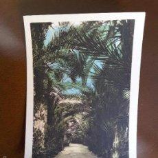 Postales: POSTAL DE ELCHE - 11. HUERTO DEL CURA. Lote 60193899