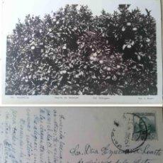 Postales: HUERTO DE NARANJO. VALENCIA. L. ROISIN. Nº 194.CIRCULADA. 15 DE DICIEMBRE DE 1936.. Lote 68389629