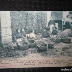 Postales: CLASIFICACIÓN DE NARANJA. CARCAGENTE. ( VALENCIA ).. Lote 93279995