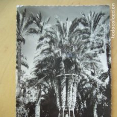Postales: ELCHE (ALICANTE) - HUERTO DEL CURA. PALMERA IMPERIAL. Lote 96132367
