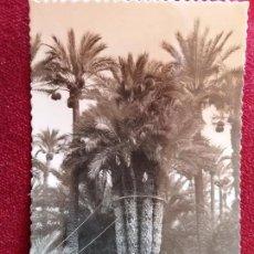 Postales: ELCHE. HUERTO DEL CURA. ED.GARCIA GARRABELLA Nº29. CIRCULADA 1954. Lote 98384483