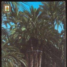 Postales: 48 - ELCHE (ALICANTE).- HUERTO DEL CURA. PALMERA IMPERIAL. Lote 98546515