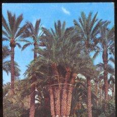 Postales: ELCHE (ALICANTE) - 1 .- HUERTO DEL CURA. PALMERA IMPERIAL. Lote 98547027