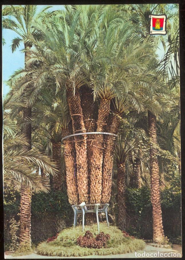 ELCHE.- HUERTO DEL CURA. PALMERA IMPERIAL (Postales - España - Comunidad Valenciana Moderna (desde 1940))