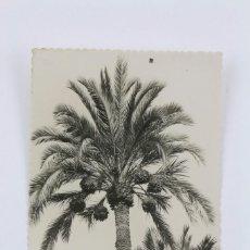 Postales: ANTIGUA POSTAL FOTOGRAFICA -ELCHE, HUERTO DEL CURA, EJEMPLAR DE PALMERA -EDICIONES GARCÍA GARRABELLA. Lote 101273843