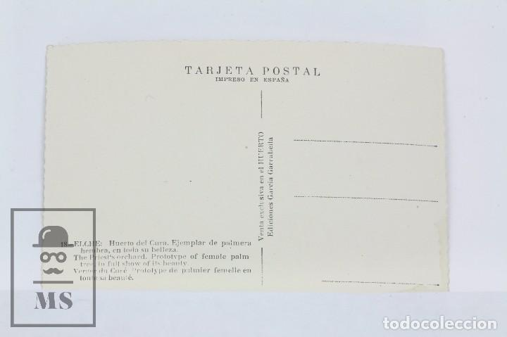 Postales: Antigua Postal Fotografica -Elche, Huerto Del Cura, Ejemplar De Palmera -Ediciones García Garrabella - Foto 2 - 101273843
