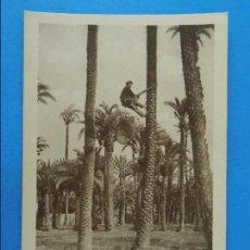 Postales: ANTIGUA POSTAL DE ELCHE (ALICANTE) - HUERTO IMPERIAL, SUBIDA A LAS PALMERAS - FOTO ROISIN - . R-8208. Lote 110723611