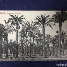 Postales: POSTAL ELCHE BOSQUE DE PALMERAS 1911 FOTOTIPIA THOMAS NO ESCRITA NI CIRCULADA. Lote 130223567