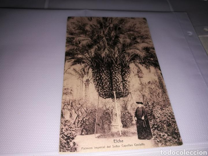 ANTIGUA POSTAL. ELCHE. PALMERA IMPERIAL DEL SEÑOR CAPELLÁN CASTAÑO. AÑOS 20 (Postales - España - Comunidad Valenciana Antigua (hasta 1939))
