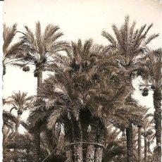 Postales: ELCHE (ALICANTE) - HUERTO DEL CURA. LA PALMERA IMPERIAL DE LOS OCHO BRAZOS - EDICIONES GARRABELLA. Lote 138270954