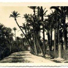 Postales: TARJETA POSTAL FOTOGRAFICA - ELCHE / CAMINO ENTRE PALMERAS. Lote 141654198