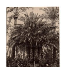 Postales: ELCHE.(ALICANTE).- PALMERA DEL CURA LA IMPERIAL. POSTAL FOTOGRÁFICA. EDICIÓN BOTELLA. Lote 146398974