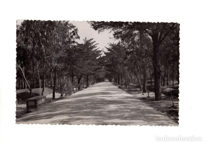 GUARDAMAR DE SEGURA.(ALICANTE).- AVENIDA CAUDILLO (Postales - España - Comunidad Valenciana Antigua (hasta 1939))