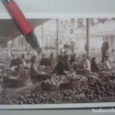 Postales: CARCAIXENT, VALENCIA - LAS NARANJAS EN EL ALMACÉN - FACSÍMIL Nº 14 DE SARTHOU, C.A., 1925 - RAREZA. Lote 151448126