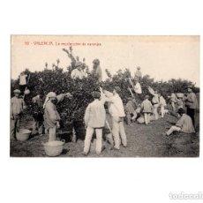Postales: VALENCIA.- RECOLECCIÓN DE LA NARANJA.. Lote 154259750