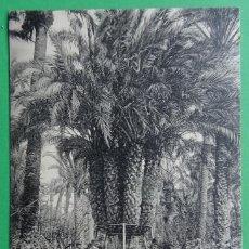Postales: ELCHE - ALICANTE - PALMERA DEL CAPELLAN CASTAÑOS. Lote 155710186