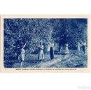 Postales: BUSOT.(ALICANTE).- STATION CLIMATIQUE ET THERMALE.LA CUEILLETTE DES CITRONS EN JANVIER. Lote 159898514