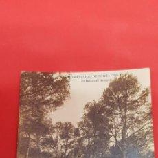 Postales: MONASTERIO DE PORTA-COELI. DETALLE DEL BOSQUE. Lote 160679978