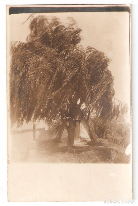 FOTOGRAFICA. VALENCIA. BARRACA VALENCIANA AÑOS 20 . VELL I BELL. (Postales - España - Comunidad Valenciana Antigua (hasta 1939))