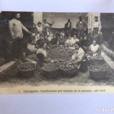 Postales: CARCAGENTE (VALENCIA) POSTAL NO.1, CLASIFICACIÓN POR TAMAÑO DE NARANJA..AÑO 1910.EDITA: J. HUGUET. Lote 173863114