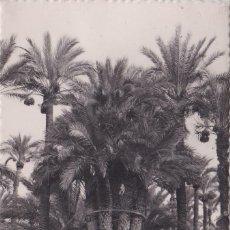 Postales: ELCHE (ALICANTE) - HUERTO DEL CURA - LA PALMERA IMPERIAL. Lote 188612097