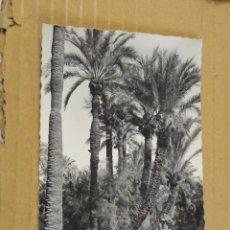 Postales: 19 ELCHE HUERTO DEL CURA. ARQUITECTURA DE LOS MEDIOS TRONCOS. EDICIONES GARCÍA GARRABELLA . Lote 190992708