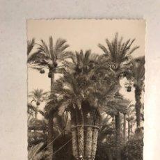 Postales: ELCHE (ALICANTE) POSTAL NO.29, HUERTO DEL CURA. LA PALMERA IMPERIAL DE LOS OCHO BRAZOS (H.1950?). Lote 191927787