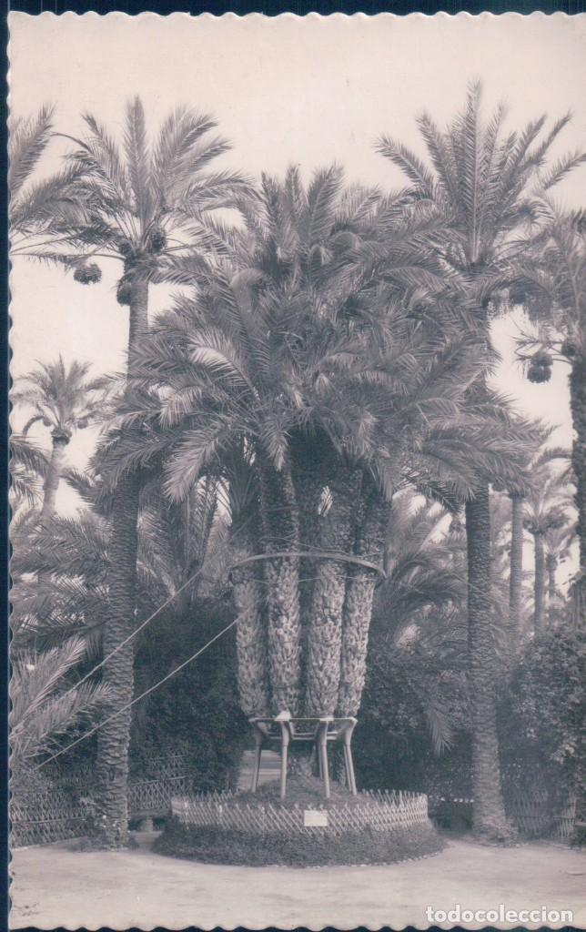POSTAL ELCHE - HUERTO DEL CURA - LA PALMERA IMPERIAL DE LOS OCHO BRAZOS - GARRABELLA (Postales - España - Comunidad Valenciana Antigua (hasta 1939))