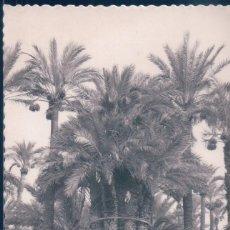 Postales: POSTAL ELCHE - HUERTO DEL CURA - LA PALMERA IMPERIAL DE LOS OCHO BRAZOS - GARRABELLA. Lote 194282131