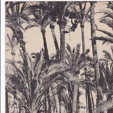 Postales: ALICANTE ELCHE RECOLECCION DE DATILES. ED.THOMAS Nº 25. SIN CIRCULAR. Lote 205046016