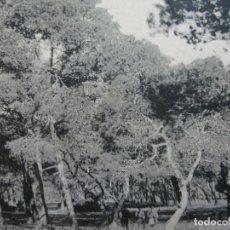 Postales: CASTELLON-GRAO-VISTA DE LA PINEDA-THOMAS-20-POSTAL ANTIGUA-(70.972). Lote 206380987