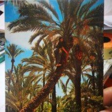 Postales: POSTAL ELCHE EL HUERTO DEL CURA CAMPING PALMERAL N 12 JIMÉNEZ S/C. Lote 210224262