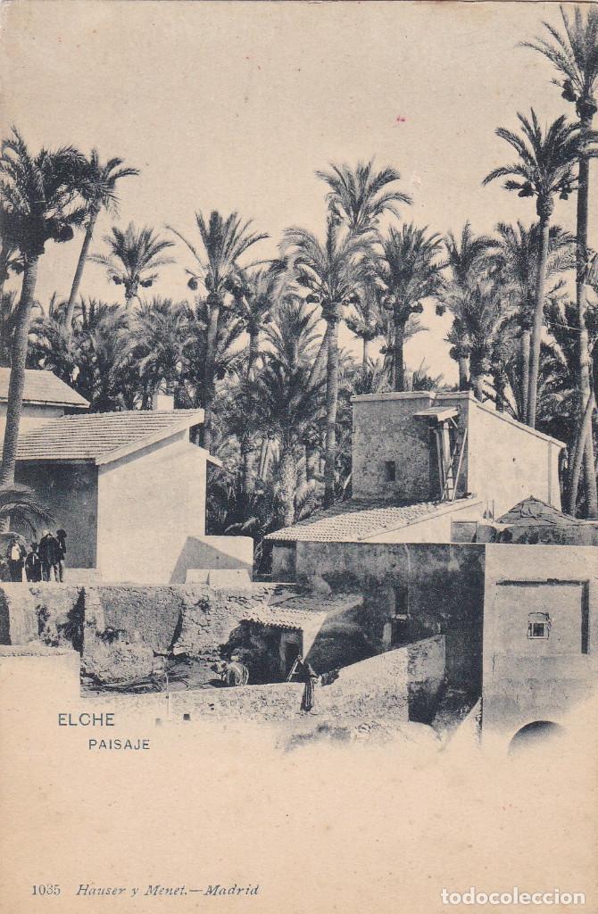 ALICANTE ELCHE PAISAJE. ED HAUSER Y MENET Nº 1035. REVERSO SIN DIVIDIR. SIN CIRCULAR (Postales - España - Comunidad Valenciana Antigua (hasta 1939))