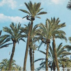 Cartes Postales: ELCHE, PODA DE PALMERAS – GARCIA GARRABELLA Nº 40 – S/C. Lote 218634826