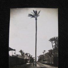 Postales: ELCHE-LA PALMERA DE LA ESTACION DEL FERROCARRIL-FOTOGRAFICA-ROISIN-POSTAL ANTIGUA-VER FOTOS-(77.841). Lote 245101650