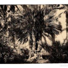 Postales: ELCHE - PALMERA DEL CURA - ROISIN Nº 6 - 136X90 MM. Lote 253961435