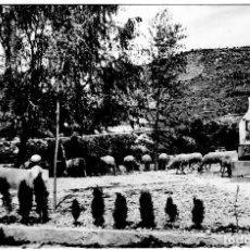 Postales: PUEBLA DE ARENOSO (CASTELLÓN) - FUENTE DE LA SALUD - ED. COMAS ALDEA 1007 - 150X103MM.. Lote 270151118